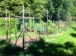 See the community garden